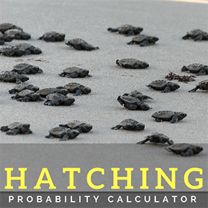 Vero Beach Baby Turtle Hatching Probability Calculator