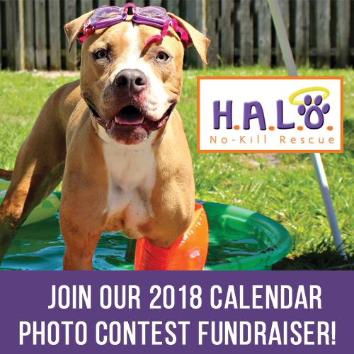 HALO Calendar Photo Contest