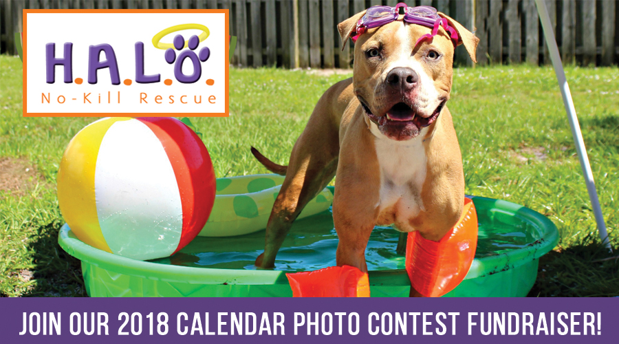 Calendar Photography Contest : Do not disturb halo s calendar photo contest