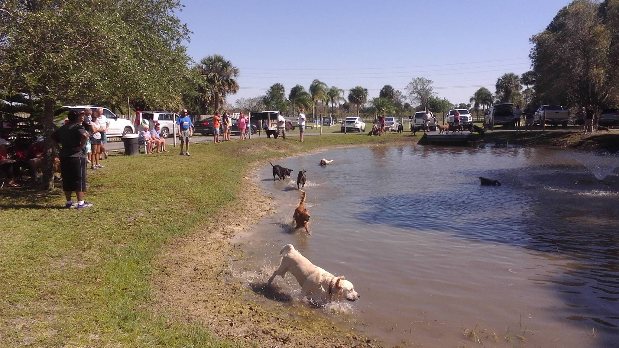 Pond Party At Pawprints