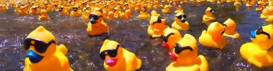 Great Duck Derby  2