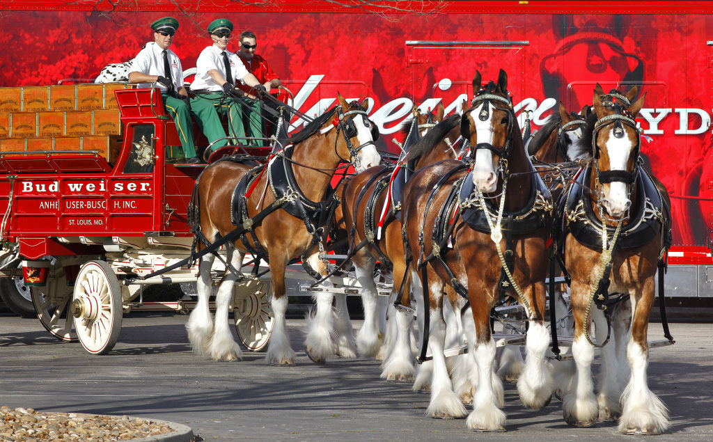 Budweiser Clydesdale Horses Wallpaper Clydesdale Horses to Parade in