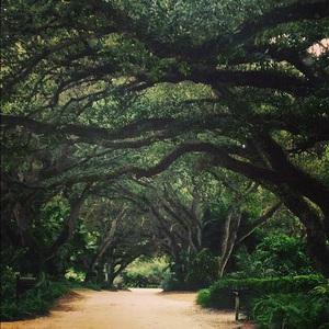 Vero's Tree Lined Streets