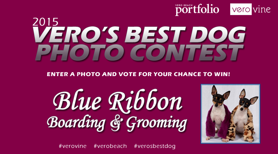 Vero's Best Dog Photo Contest of 2015