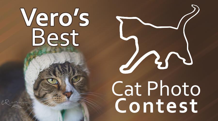 veros-best-cat-photo-contest-2015