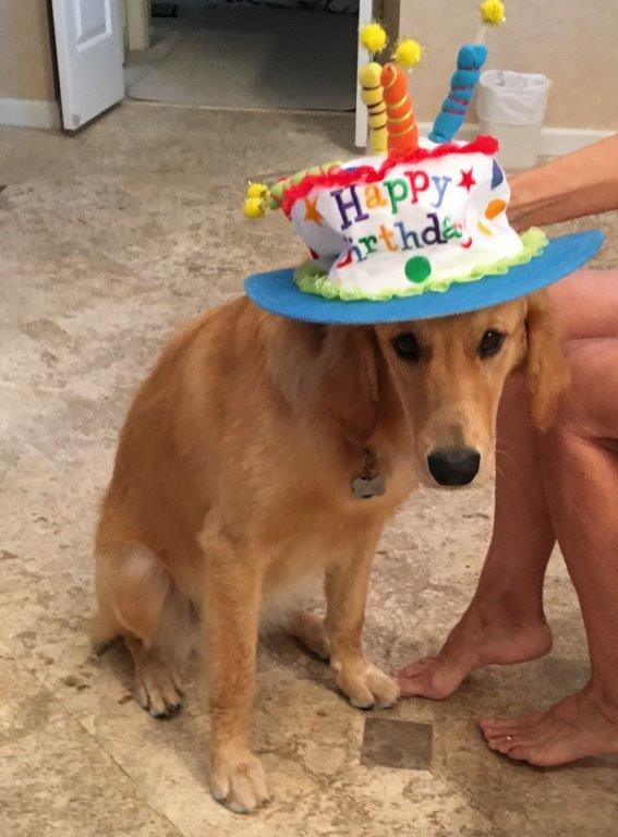 Jewels Reluctantly Displaying Her One Year Old Happy Birthday Hat By Jeffrey Wheeler