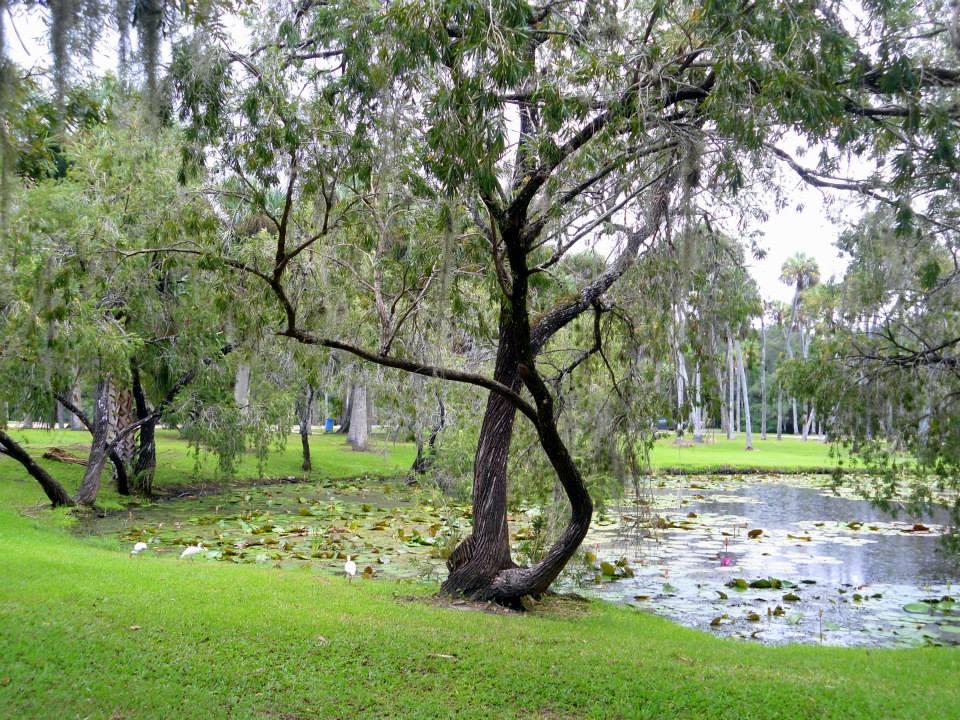 Twisted Strength Treasure Coast Trees Of Life Photo Contest