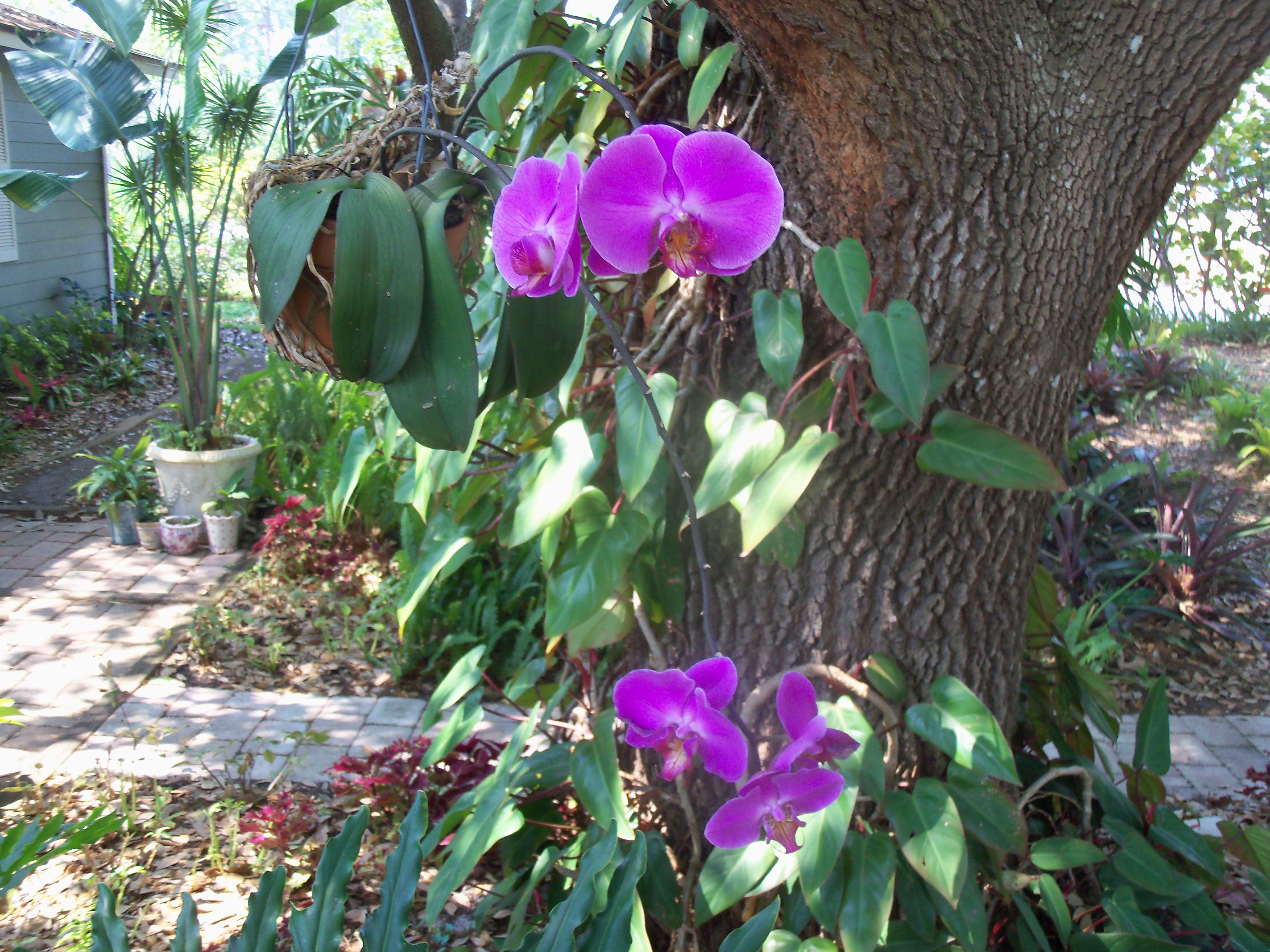Purple Beauty Treasure Coast Trees Of Life Photo Contest
